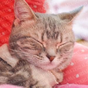「寝ているねこ01」の女子向け無料素材