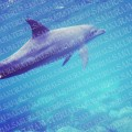 dolphin_02_sample