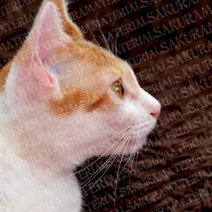 「猫の横顔(キラキラした目)」の女子向け無料素材