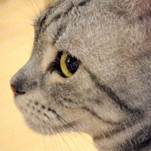 ちらりとみる猫の横顔