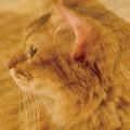 「可愛らしい猫の横顔」の女子向け無料素材