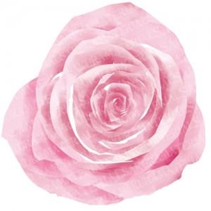 「バラ(ローズ)のイラスト01」の女子向け無料素材