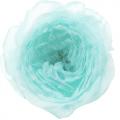 「ブルーのラナンキュラスの写真02」の女子向け無料素材
