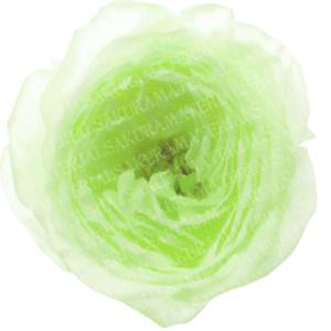 「グリーンのラナンキュラスの写真02」の女子向け無料素材