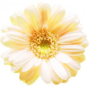 「ガーネットの黄色」の女子向け無料素材